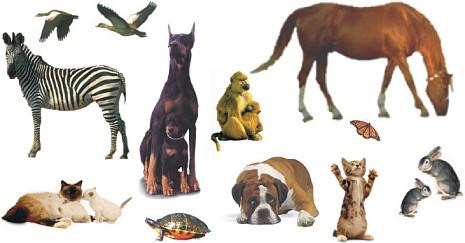 ESPECIAL ANIMALES Y MASCOTAS