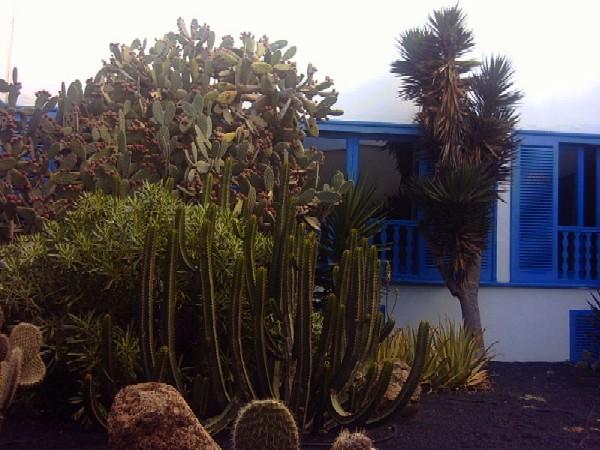 Vii jornadas de turismo de canarias for El jardin canario