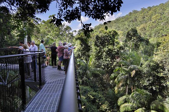 how to get from brisbane to tamborine national park
