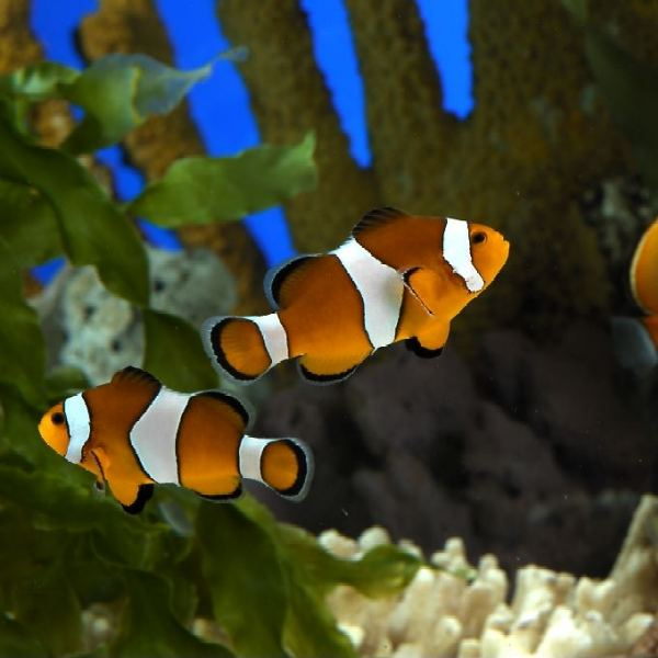 L 39 aquarium barcelona catalu a for Peces marinos para acuarios pequenos