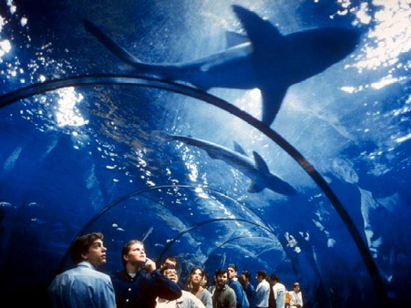 L 39 aquarium barcelona catalu a for Aquarium de barcelona
