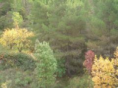 Font del Morer. Vegetación en otoño. Foto Mariano Estrada