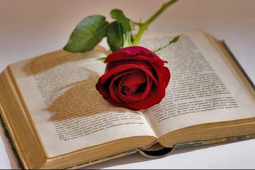 Resultado de imagen para dia del libro y la rosa