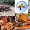 El Cerdo Negro Mallorquín, la raza porcina autóctona por excelencia