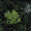 Día Internacional de los Bosques : 21 de marzo