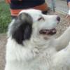 Vídeo: Así recibe un perro a su dueño tras seis meses sin verse